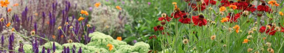 Inspired Garden Design Planting